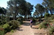 Forêt départementale de Roques-Hautes