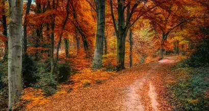 Traditions: Fêtes gourmandes pour célébrer l'arrivée de l'automne dans le Var