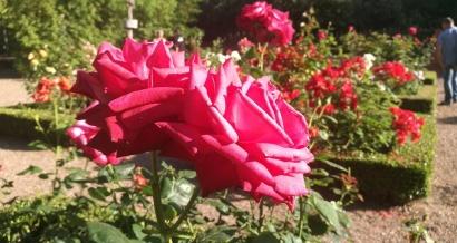 Six-Fours : Le Jardin du Cygne obtient le label Jardin remarquable