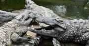Direction Pierrelatte pour visiter la Ferme aux crocodiles
