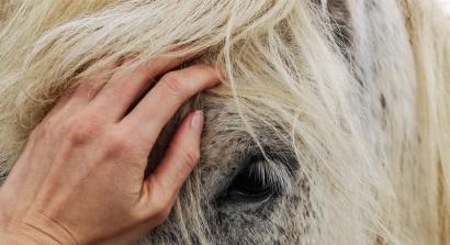 Je peux pas j'ai poney...ce week-end certains centres équestres ouvrent gratuitement leurs portes
