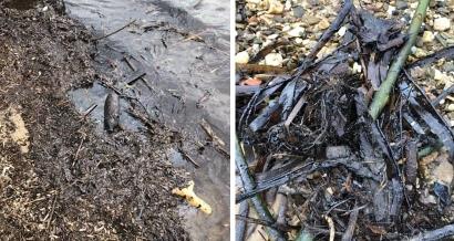 Trois  plages de Porquerolles touchées par les boulettes de pétrole ce mercredi
