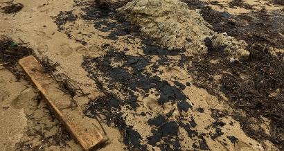 Près de 150 personnes mobilisées dès jeudi pour nettoyer les plages du Var