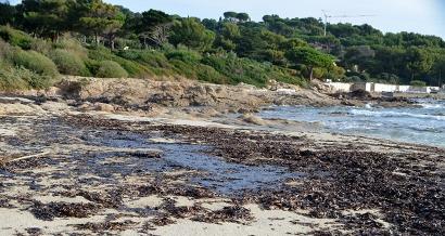 Pollution aux hydrocarbures: les photos et vidéos des plages souillées par le pétrole