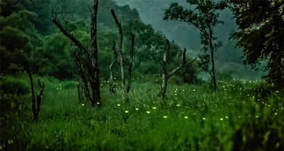 Chateauvallon se lance dans l'élevage de lucioles: C'est un projet sérieux et participatif