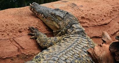 Pierrelatte : La ferme aux crocodiles fête la musique !