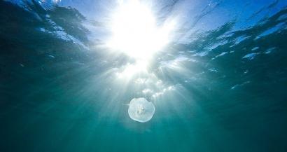 Baignade: Présence de méduses dans les Bouches du Rhône et dans le Var