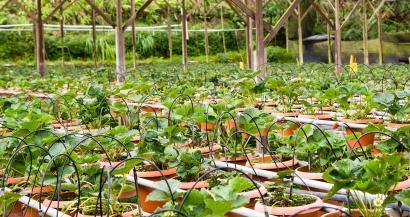 Acheter des graines, des semis ou des fleurs? On fait le point sur ce qui est autorisé ou interdit