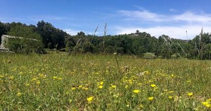 Le plateau de Siou Blanc, du vert à perte de vue