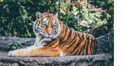 Le Zoo de la Barben, le Parc Zoa et le Zoo de Fréjus...sont ouverts