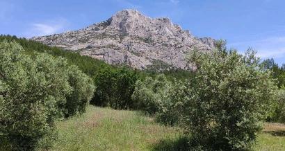 Balade dans le domaine de Roques Hautes : les Harmelins et le Refuge Cézanne