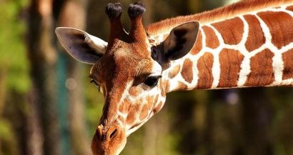 Un coup de pouce financier pour les cirques, les zoos et les refuges impactés par la crise du covid