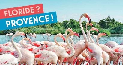 Bon plan : 100 euros offerts pour vos activités dans les Bouches du Rhône grâce au Pass Séjours