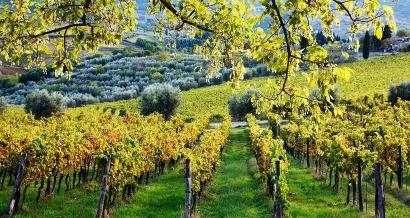 Agritourisme:5 fermes et domaines viticoles à visiter en PACA