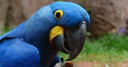 Les zoos et activités de plein air vont rouvrir le 19 mai, les parcs d'attraction le 9 juin