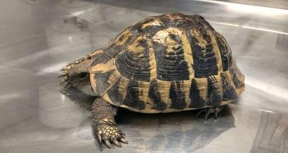 Incendie du Var : 55 tortues retrouvées vivantes