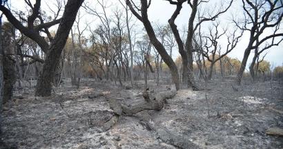 Comment la forêt des Maures peut-elle se remettre de l'incendie?