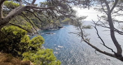 Pinède et baignade au Mont Salva à Six-Fours