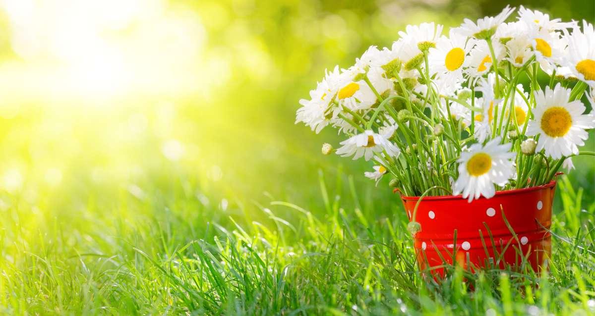 On f�te le printemps dans les Bouches du Rh�ne