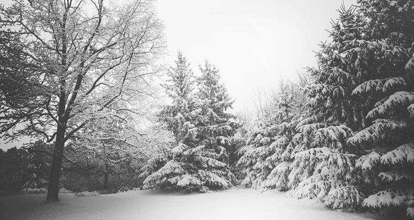 Alpes du Sud: les premi�res chutes de neige annonc�es pour ce weekend