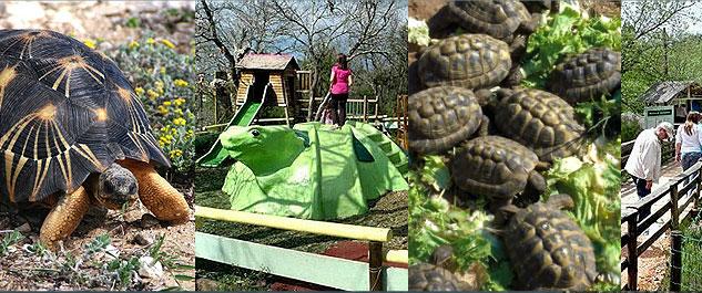 Village des tortues gonfaron frequence for Avoir une tortue a la maison