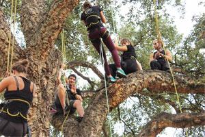 Grimpez dans les arbres