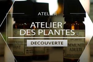 On a test� : les ateliers d�couverte des huiles essentielles avec l'Atelier des Plantes