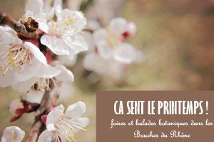 On fête le printemps dans les Bouches du Rhône