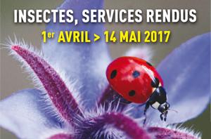 Insectes, services rendus