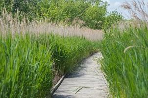 Balade 100% nature au Marais du Vigueirat